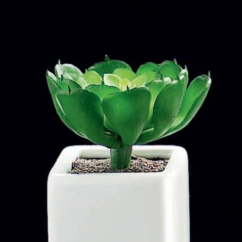 ASA Selection Sukulent malý v kvetináči, dekorácie, biela / zelená, 5x5x5cm